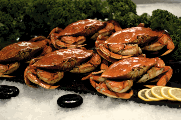 how to clean pre cooked dungeness crab